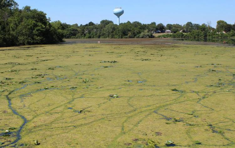 Solution for Pine River: Stop farm over fertilization?